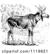 Clipart Of A Retro Vintage Black And White Wild Elk Royalty Free Vector Illustration by Prawny Vintage
