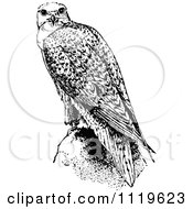 Clipart Of A Retro Vintage Black And White Falcon Bird Royalty Free Vector Illustration