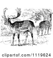 Clipart Of Retro Vintage Black And White Grazing Fallow Deer Royalty Free Vector Illustration by Prawny Vintage
