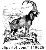 Clipart Of A Retro Vintage Black And White Ibex Wild Goat Royalty Free Vector Illustration by Prawny Vintage