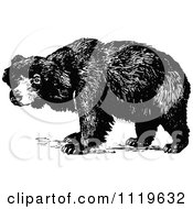 Clipart Of A Retro Vintage Black And White Sloth Bear Royalty Free Vector Illustration by Prawny Vintage