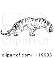 Clipart Of A Retro Vintage Black And White Tiger Royalty Free Vector Illustration by Prawny Vintage