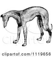 Clipart Of A Retro Vintage Black And White Greyhound Dog Royalty Free Vector Illustration