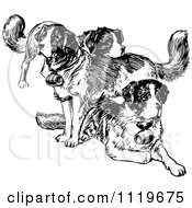 Retro Vintage Black And White St Bernard Dogs