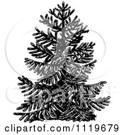 Clipart Of A Retro Vintage Black And White Chile Pine Monkey Puzzle Tree Royalty Free Vector Illustration by Prawny Vintage