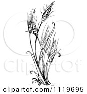 Clipart Of A Retro Vintage Black And White Wheat Plant Royalty Free Vector Illustration