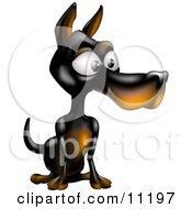 Calm Doberman Pinscher Puppy Dog Sitting