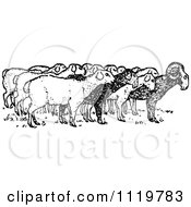Clipart Of A Retro Vintage Black And White Ram With Sheep Royalty Free Vector Illustration by Prawny Vintage