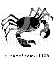 The Cancer Astrology Sign Of The Zodiac The Crab