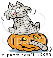 Cartoon Of A Cat Sitting On A Halloween Jackolantern With Its Tail Going Through The Nose Royalty Free Vector Clipart