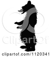 Clipart Of A Silhouetted Standing Grizzly Bear Royalty Free Vector Illustration by Prawny Vintage