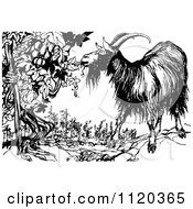 Clipart Of A Retro Vintage Black And White Goat Eating From An Ent Grape Vine Royalty Free Vector Illustration