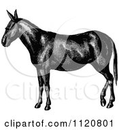 Clipart Of A Retro Vintage Black And White Horse Or Mule Royalty Free Vector Illustration