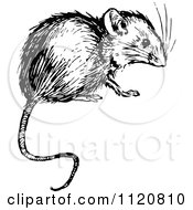 Clipart Of A Retro Vintage Black And White Mouse Royalty Free Vector Illustration by Prawny Vintage