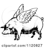 Clipart Of A Retro Vintage Black And White Winged Pig Royalty Free Vector Illustration by Prawny Vintage #COLLC1120827-0178