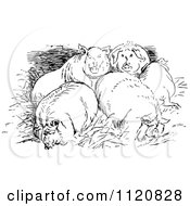 Clipart Of Retro Vintage Black And White Huddled Pigs Royalty Free Vector Illustration by Prawny Vintage