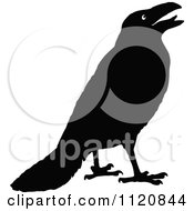Clipart Of A Retro Vintage Black And White Crow 1 Royalty Free Vector Illustration