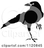 Clipart Of A Retro Vintage Black And White Crow 2 Royalty Free Vector Illustration