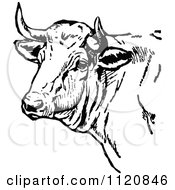 Clipart Of A Retro Vintage Black And White Cow Head Royalty Free Vector Illustration by Prawny Vintage