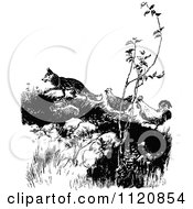 Clipart Of A Retro Vintage Black And White Fox Luring Chickens Up A Hill Royalty Free Vector Illustration