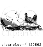 Clipart Of A Retro Vintage Black And White Turkey With Geese Royalty Free Vector Illustration