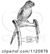 Clipart Of A Retro Vintage Black And White Pet Parrot On A Chair Royalty Free Vector Illustration by Prawny Vintage