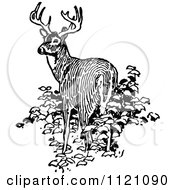 Clipart Of A Retro Vintage Black And White Deer In Bushes Royalty Free Vector Illustration by Prawny Vintage