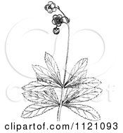Clipart Of A Retro Vintage Black And White Botanical Plant With Flowers 2 Royalty Free Vector Illustration by Prawny Vintage