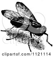 Clipart Of A Retro Vintage Black And White House Fly Royalty Free Vector Illustration