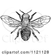 Clipart Of A Retro Vintage Black And White Drone Bee Royalty Free Vector Illustration by Prawny Vintage #COLLC1121128-0178