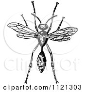 Retro Vintage Black And White Wasp