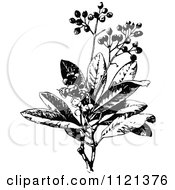 Clipart Of A Retro Vintage Black And White Allspice Plant Royalty Free Vector Illustration by Prawny Vintage