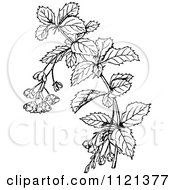 Clipart Of A Retro Vintage Black And White Barberry Branch Royalty Free Vector Illustration by Prawny Vintage