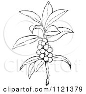 Clipart Of A Retro Vintage Black And White Plant With Berries Royalty Free Vector Illustration by Prawny Vintage