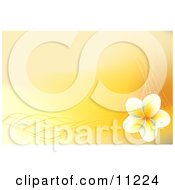 Yellow And White Frangipani Plumeria Flower Background Clipart Illustration