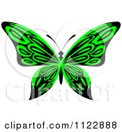 Clipart Of A Lime Green Butterfly Royalty Free Vector Illustration by Vector Tradition SM