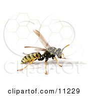 Yellow Jacket Wasp With A Shadow And Honeycomb