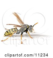 Yellow Jacket Bee Wasp With A Shadow Clipart Illustration