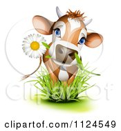 Cute Jersey Cow With A Daisy In Its Mouth Standing In Grass