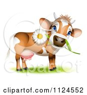 Clipart Of A Cute Jersey Cow With A Daisy In Its Mouth Royalty Free Vector Illustration by Oligo