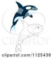 Cartoon Of Outlined And Colored Happy Jumping Orca Killer Whales Royalty Free Clipart