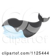 Happy Right Whale