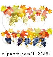 Clipart Of Borders Of Autumn Maple Leaves And Grapes Royalty Free Vector Illustration