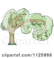 Cartoon Of A Tree With Green Foliage 23 Royalty Free Vector Clipart by lineartestpilot