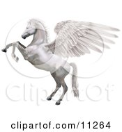 Poster, Art Print Of A White Winged Horse Pegasus Rearing Up On Its Hind Legs