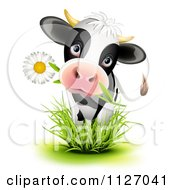 Cartoon Of A Cute Holstein Cow Eating A Daisy Flower And Standing In Grass Royalty Free Vector Clipart