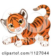 Cartoon Of A Frisky Tiger Cub In A Playful Stance Royalty Free Vector Clipart by Pushkin