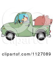 Farmer Driving A Truck With Pig In The Bed