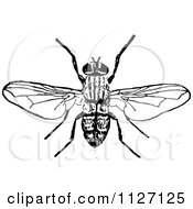 Clipart Of A Retro Vintage Black And White Bee 1 Royalty Free Vector Illustration by Prawny Vintage