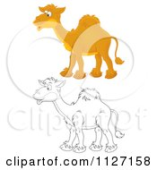 Cartoon Of Happy Colored And Outlined Camels Royalty Free Clipart